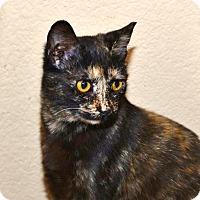 Adopt A Pet :: Luciana - Davis, CA