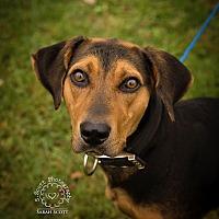 Adopt A Pet :: Autumn - Guelph, ON