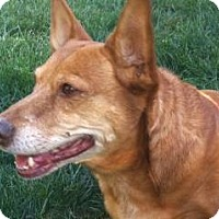 Adopt A Pet :: TIPSY - Forest Ranch, CA