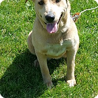 Adopt A Pet :: Blondie - Quincy, IN