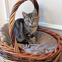 Adopt A Pet :: Rocket - Smyrna, GA