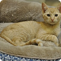 Adopt A Pet :: Dewey (Super FRIENDLY!) - New Smyrna Beach, FL