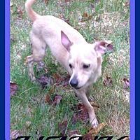 Adopt A Pet :: HANK - Halifax, NS