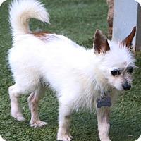 Adopt A Pet :: Campbell - Woonsocket, RI