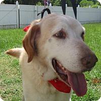 Adopt A Pet :: Duke - Murrells Inlet, SC