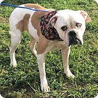 Adopt A Pet :: ELLIE - Fort Pierce, FL