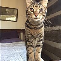 Adopt A Pet :: Doc Watson - charlottesville, VA