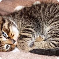 Adopt A Pet :: Newman - Lebanon, PA