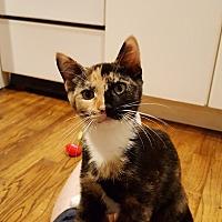 Adopt A Pet :: Aly - Ronkonkoma, NY
