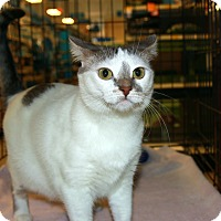 Adopt A Pet :: Lilly - Rochester, MN