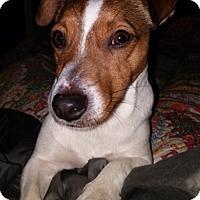 Adopt A Pet :: Little Jack in Beaumont, TX - Austin, TX