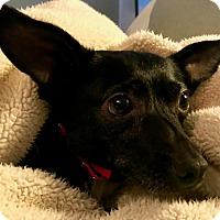 Adopt A Pet :: Mia Mia - Lexington, KY