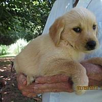 Adopt A Pet :: PARKER - Williston Park, NY