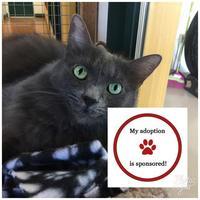 Adopt A Pet :: Irie - Petaluma, CA