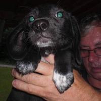 Adopt A Pet :: Halo - Fairfax Station, VA