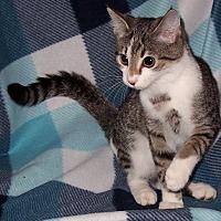 Adopt A Pet :: Aurora - Metamora, IN