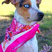 Adopt A Pet :: Sparkle - Batesville, AR