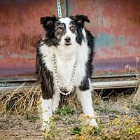 Adopt A Pet :: Harley Girl - Salt Lake City, UT