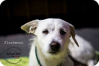 Jack Russell Terrier Mix Dog for adoption in Burbank, California - Fleetwood