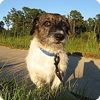 Adopt A Pet :: Jasper - Thomasville, NC
