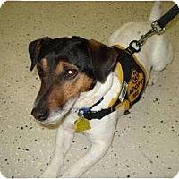 Adopt A Pet :: Rexx - Omaha, NE