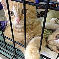 Adopt A Pet :: Lorax - Byron Center, MI