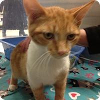 Adopt A Pet :: Houston - Byron Center, MI
