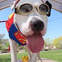 Adopt A Pet :: Kevin - Las Vegas, NV