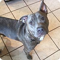 Adopt A Pet :: Owen - Davison, MI