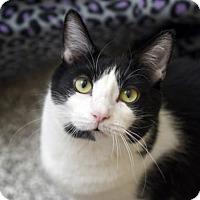 Adopt A Pet :: Frank Sinatra - Chattanooga, TN