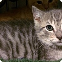 Adopt A Pet :: Dancer - East Brunswick, NJ