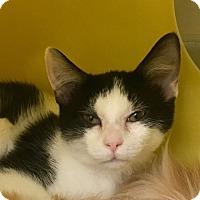 Adopt A Pet :: Manny - Warren, OH