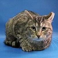 Adopt A Pet :: Amy - Overland Park, KS