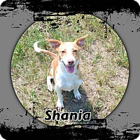Adopt A Pet :: Shania is ADOPTED - Buffalo, IN