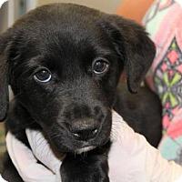 Adopt A Pet :: June - Kinston, NC