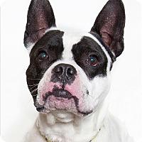 Adopt A Pet :: Madden - San Luis Obispo, CA