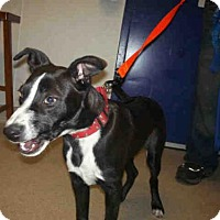 Adopt A Pet :: CHARLIE - Bakersfield, CA
