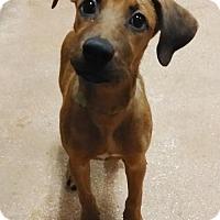 Adopt A Pet :: 437009 Sally - San Antonio, TX