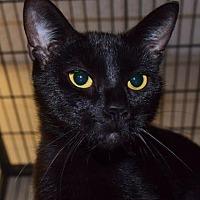 Adopt A Pet :: Lori - Saginaw, MI