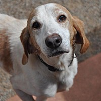 Adopt A Pet :: Humphrey - Canton, CT