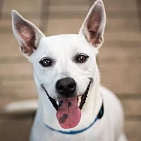 Adopt A Pet :: Luna - St. Petersburg, FL