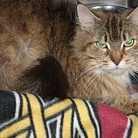 Adopt A Pet :: TINKERBELL - Clayton, NJ