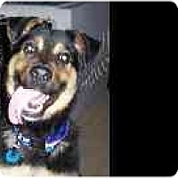 Adopt A Pet :: Butch - Evansville, IN