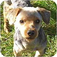 Adopt A Pet :: Teddy - Columbus, OH