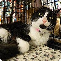 Adopt A Pet :: Fluffy McButt - The Colony, TX