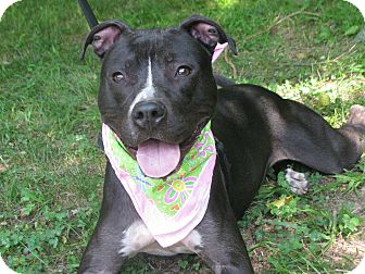 Pit Bull Terrier Mix Dog for adoption in Voorhees, New Jersey - Princess