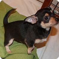 Adopt A Pet :: Bumper - Seattle, WA