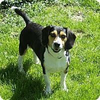 Adopt A Pet :: Tator PENDING - Indianapolis, IN