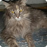Adopt A Pet :: Momma - Harriman, NY