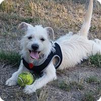 Adopt A Pet :: Blanca - Gig Harbor, WA